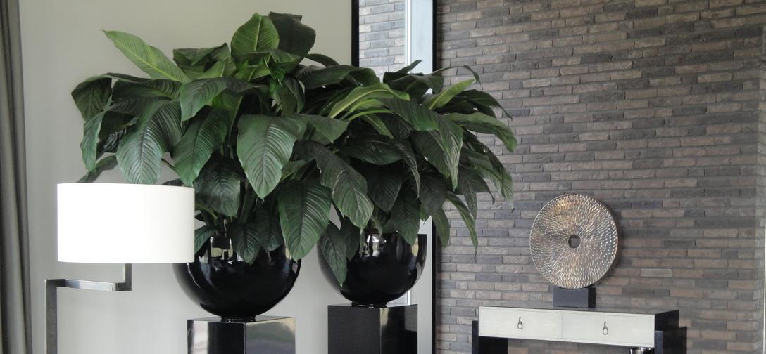 Grote kamerplanten particulier-interieurbeplanting-zuil-met-schaal.jpg