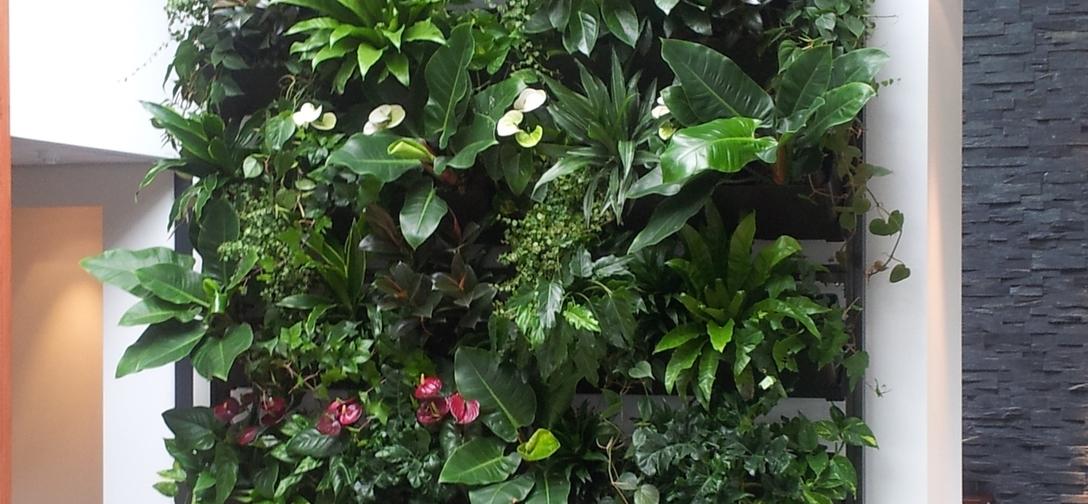 Verticale groene wanden greenwall-met-ombouw.jpg