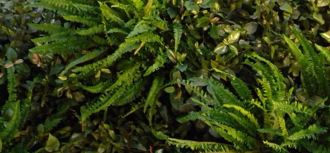 Gratis Beplantingsadvies silk-wonderwall-vrijstaand_1.jpg
