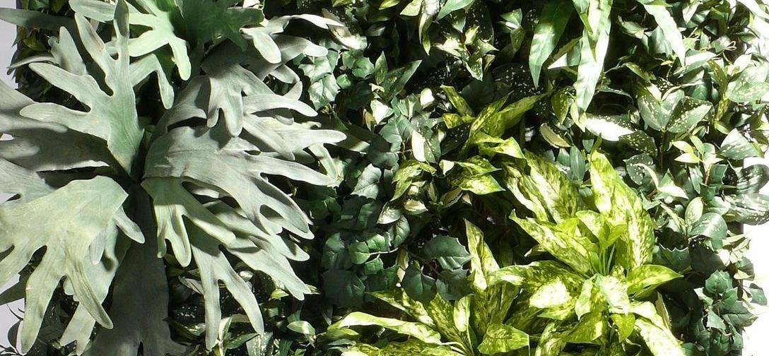 Gratis Beplantingsadvies silk-wonder-wall.jpg