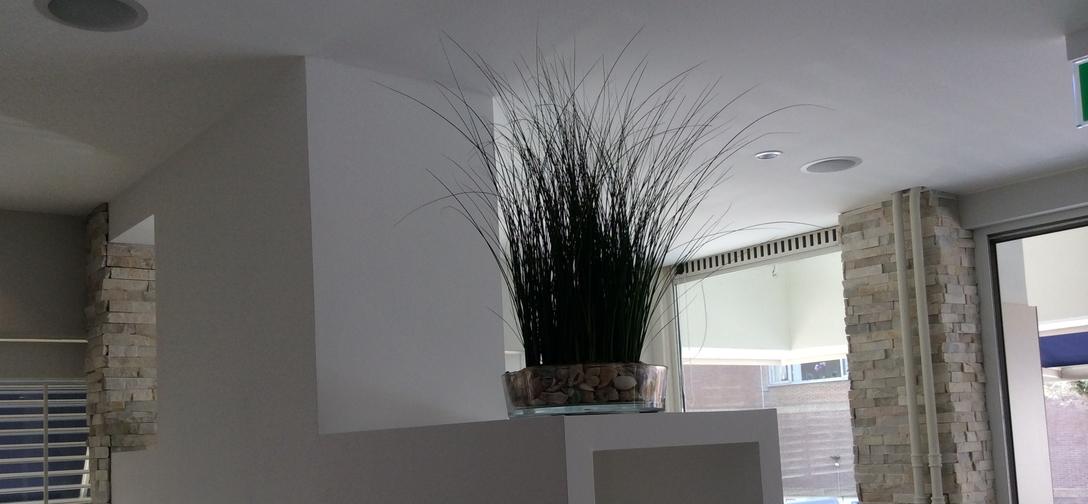 Gemummificeerde planten img-0439.jpg