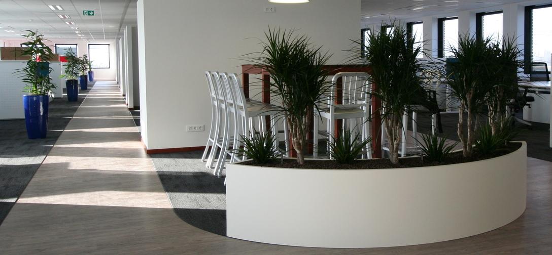 Kantoorbeplanting - Breukelen dracaena-marginata-vertakt-in-maatwerk-bak.jpg