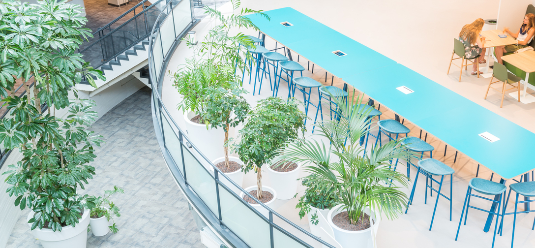 Kantoortuin beplanting rotterdam-centrum.jpg