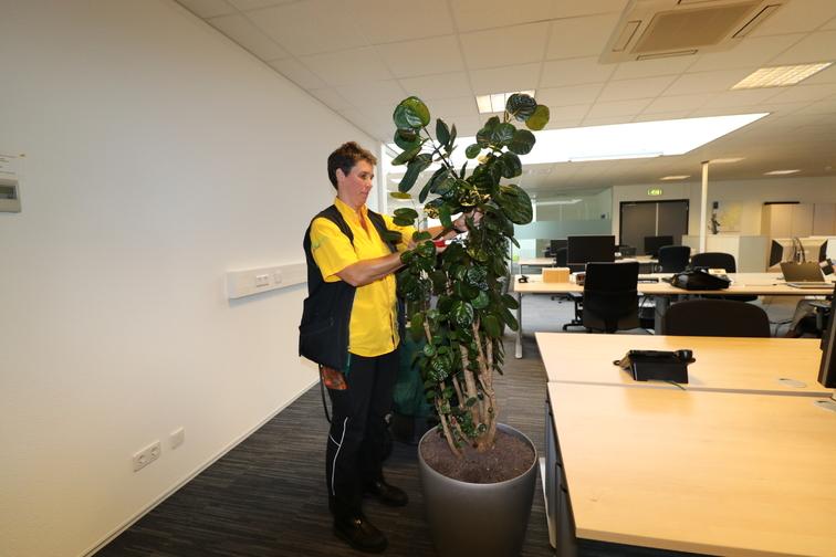 Onderhoud beplanting onderhoud-planten-snoeien-img-0606.jpg