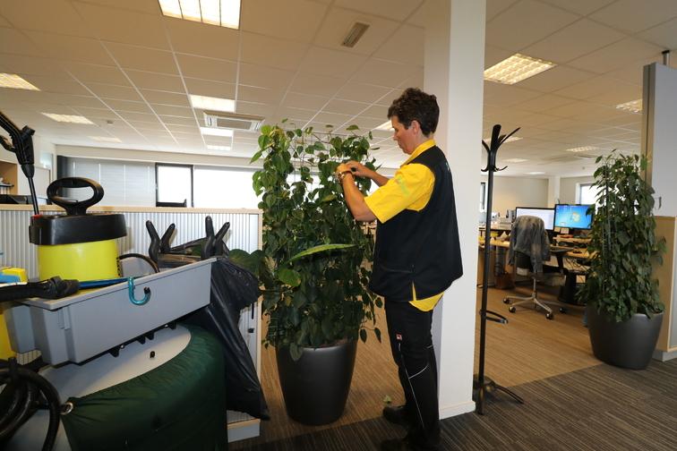 Onderhoud beplanting onderhoud-snoeien-en-opbinden-img-0615.jpg