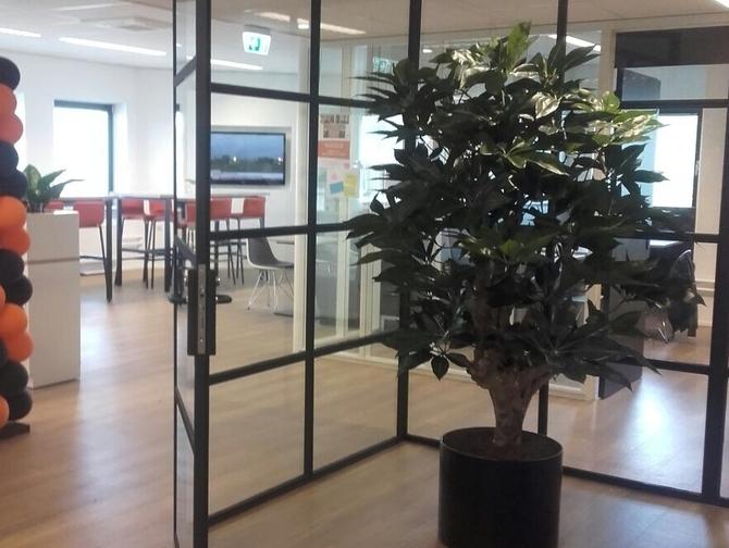 Kantoorbeplanting - Zwijndrecht co-zwijndrecht-6-kopie.jpg