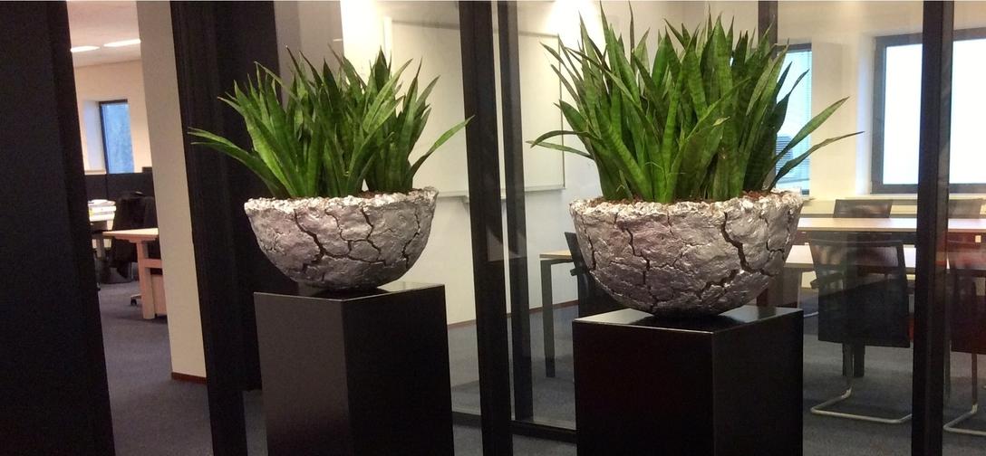 Kantoorplanten kopen co-zwijndrecht-3.jpg