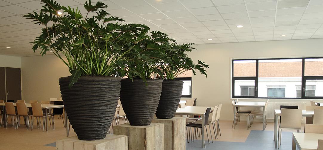 Bedrijfsrestaurant beplanting hd-kantinebeplanting2.jpg