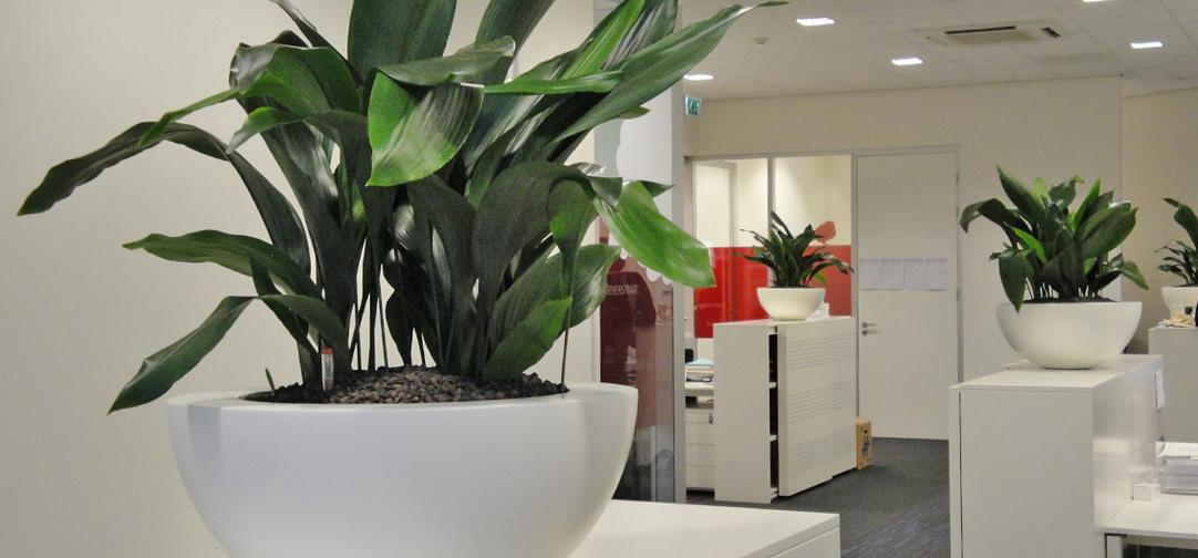 Kantoorbeplanting hd-kantoor-interieurbeplanting2.jpg