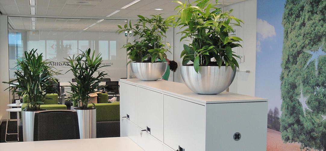 Kantoorbeplanting hd-kantoor-interieurbeplanting3.jpg