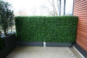 Buxus_haag_UV_zijde_balkonaankleding_Amstelveen.jpg