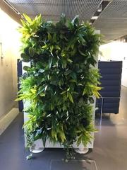 livedivider-theplantman-greenwichuniversity-2016-02-768x1024.jpg