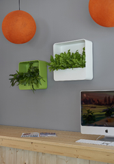 multivorm-square-wall-planter-ral-9010-ral-6017-high-shine.jpg
