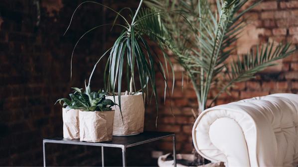 4 tips voor de verzorging van beplanting in uw woning